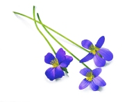 THREE FLOWERS_48999
